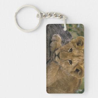 África, Kenia. Retrato de un león Llavero Rectangular Acrílico A Doble Cara