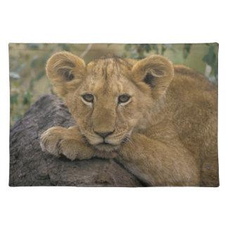 África, Kenia. Retrato de un león Manteles