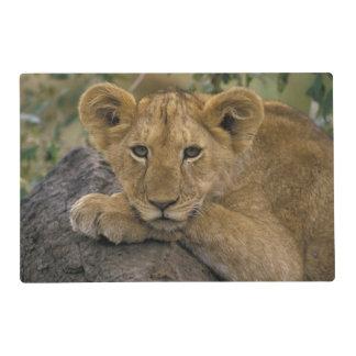 África, Kenia. Retrato de un león Tapete Individual