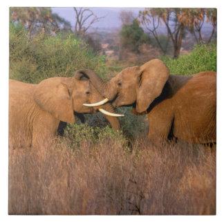 África, Kenia, Samburu. Desafío del elefante Azulejo Cuadrado Grande