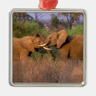 África, Kenia, Samburu. Desafío del elefante Adornos De Navidad