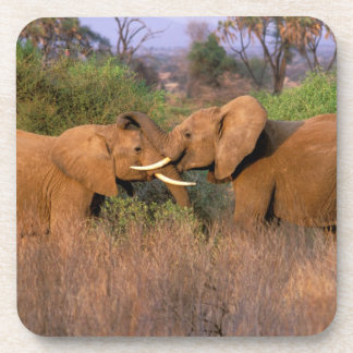 África, Kenia, Samburu. Desafío del elefante Posavasos De Bebidas