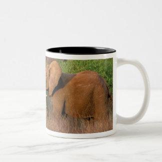 África Kenia Samburu Desafío del elefante Taza De Café