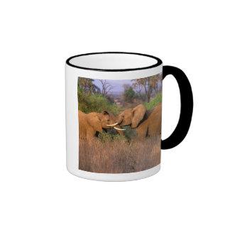 África Kenia Samburu Desafío del elefante Taza