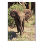 Africa, Kenya, Amboseli National Park. African 2 Card