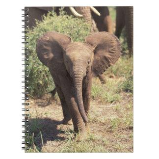 Africa, Kenya, Amboseli National Park. African 2 Notebook