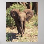 Africa, Kenya, Amboseli National Park. African 2 Print