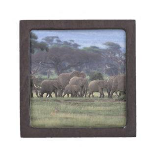 Africa, Kenya, Amboseli National Park. African 3 Premium Keepsake Boxes