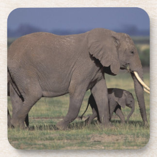 Africa, Kenya, Amboseli National Park. African 4 Coaster