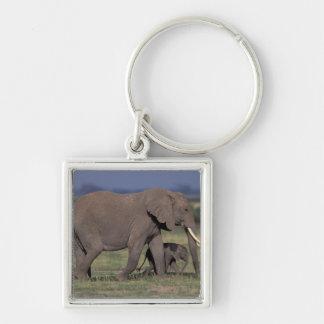 Africa, Kenya, Amboseli National Park. African 4 Keychain