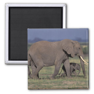 Africa, Kenya, Amboseli National Park. African 4 Magnet