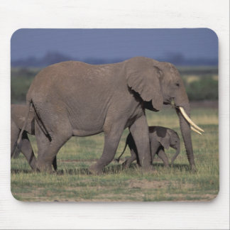 Africa, Kenya, Amboseli National Park. African 4 Mouse Pad