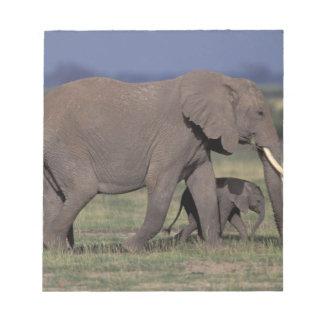 Africa, Kenya, Amboseli National Park. African 4 Notepad