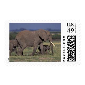 Africa, Kenya, Amboseli National Park. African 4 Stamps