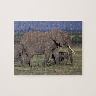 Africa, Kenya, Amboseli National Park. African 4 Puzzle