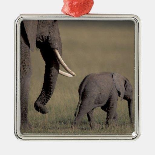 Africa, Kenya, Amboseli National Park. African Ornaments