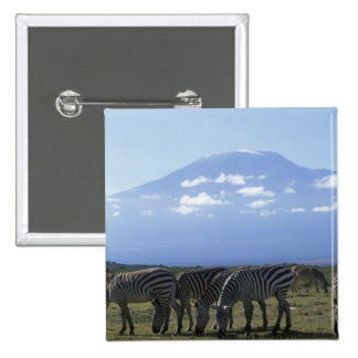 Africa, Kenya, Amboseli National Park, Herd of Button