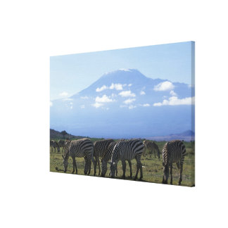 Africa, Kenya, Amboseli National Park, Herd of Stretched Canvas Print