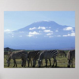Africa, Kenya, Amboseli National Park, Herd of Poster