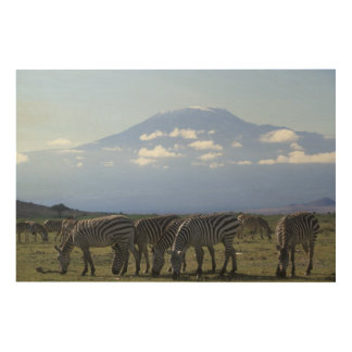 Africa, Kenya, Amboseli National Park, Herd of Wood Canvas