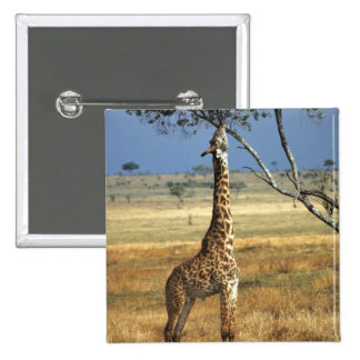 Africa, Kenya, Amboseli NP. A Common, or Masai, Pinback Button