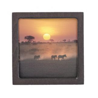 Africa, Kenya, Amboseli NP. Zebra walk to the Jewelry Box