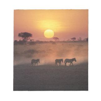 Africa, Kenya, Amboseli NP. Zebra walk to the Memo Pad