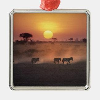 Africa, Kenya, Amboseli NP. Zebra walk to the Ornament