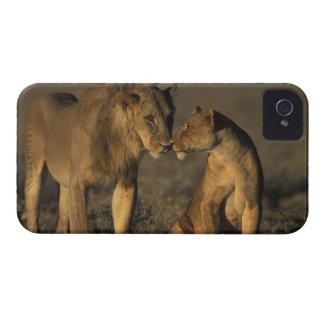 Africa, Kenya, Buffalo Springs National Reserve, iPhone 4 Cover