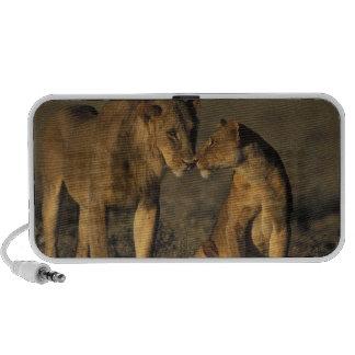 Africa, Kenya, Buffalo Springs National Reserve, Mini Speaker