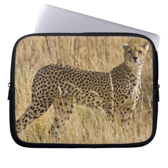 Africa. Kenya. Cheetah at Samburu NP. 2 Computer Sleeve