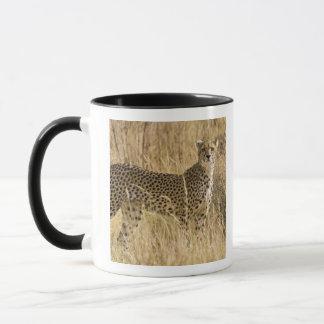 Africa. Kenya. Cheetah at Samburu NP. 2 Mug