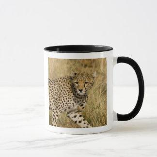 Africa. Kenya. Cheetah at Samburu NP. 3 Mug