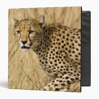Africa. Kenya. Cheetah at Samburu NP. 3 Ring Binder