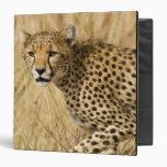 Africa. Kenya. Cheetah at Samburu NP. Binder