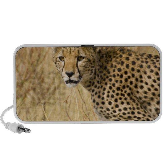 Africa. Kenya. Cheetah at Samburu NP. Portable Speaker