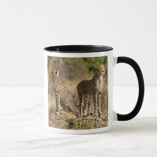 Africa. Kenya. Cheetahs at Samburu NP. Mug