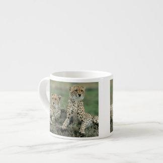 Africa, Kenya, Cheetahs Espresso Cup