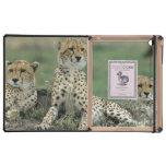 Africa, Kenya, Cheetahs iPad Cases