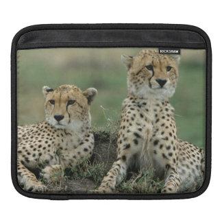 Africa, Kenya, Cheetahs iPad Sleeve