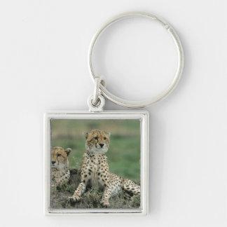 Africa, Kenya, Cheetahs Keychain