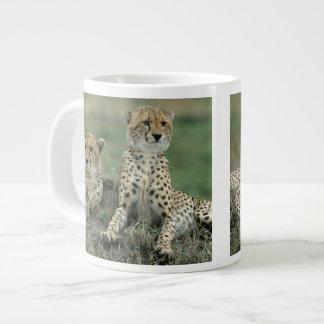 Africa, Kenya, Cheetahs Large Coffee Mug