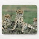 Africa, Kenya, Cheetahs Mouse Pad