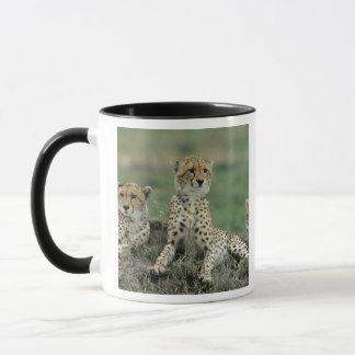 Africa, Kenya, Cheetahs Mug