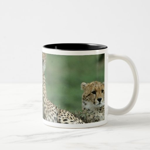 Africa, Kenya, Cheetahs Mugs