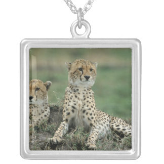 Africa, Kenya, Cheetahs Custom Jewelry