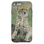 Africa, Kenya, Cheetahs Tough iPhone 6 Case