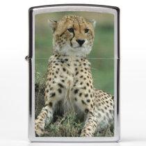 Africa, Kenya, Cheetahs Zippo Lighter