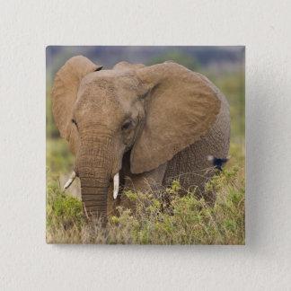 Africa. Kenya. Elephant at Samburu NP. Button