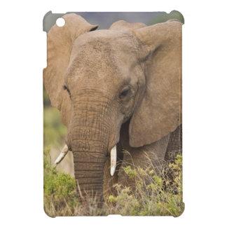 Africa. Kenya. Elephant at Samburu NP. Cover For The iPad Mini